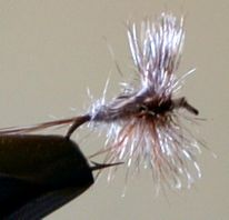 Fly Fishing: Adams Dry Fly