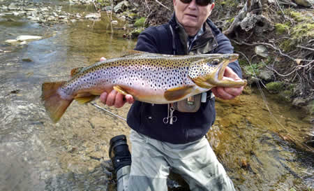 25 Inch Wild Brown Trout From Conewago Fly Fishers Private Water